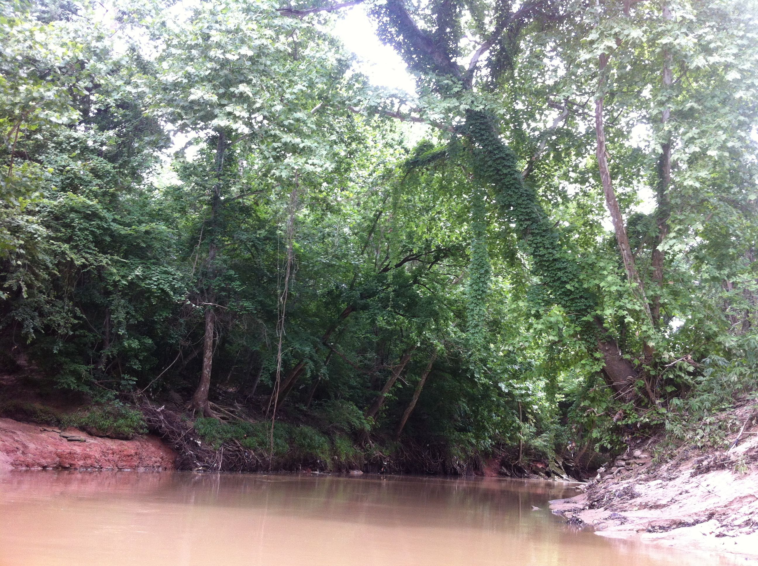 Red clay bank and riparian forest on Buffalo Bayou by Memorial Park.