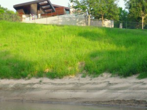 Riparian forest buffer was cut down and replaced by grass on this sloping property on Buffalo Bayou in River Oaks. Photo taken July 12, 2014.
