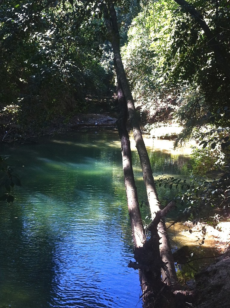 The secret pool hidden behind a closed fence in Memorial Park. This lovely pool in the woods is filled with clear water from a spring-fed tributary of Buffalo Bayou. Photo by Susan Chadwick, Nov. 1. 2014.