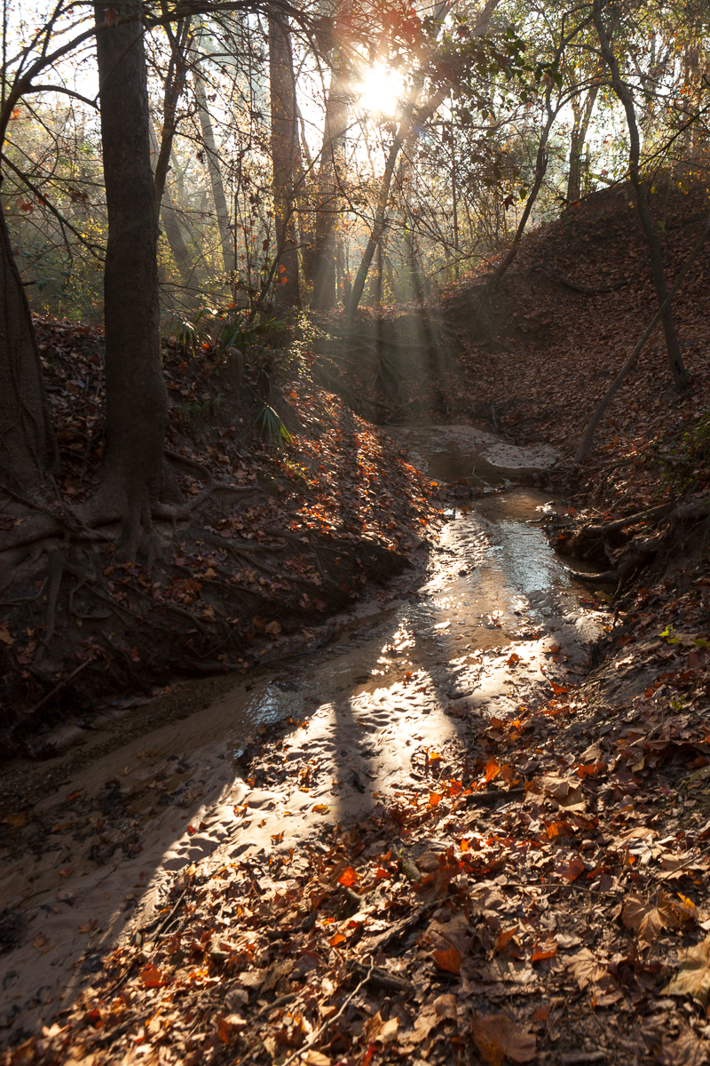 A tributary of Buffalo Bayou in the Memorial Park woods. Photo by Jim Olive