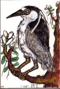 Yellow-crowned Night Heron by Frank X. Tolbert 2.