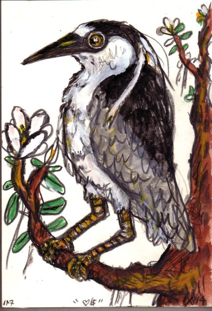 Yellow-crowned Night Heron by Frank X. Tolbert 2.
