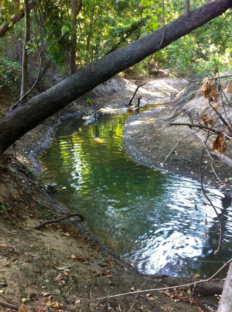 """Tributary in the Hogg Bird Sanctuary to be """"stabilized."""" Photo taken July 31, 2015, by Susan Chadwick"""