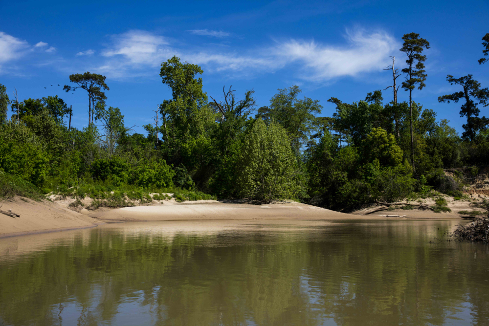 Sandy bank on a meander of Buffalo Bayou in Memorial Park. Photo by Jim Olive on April 2, 2016