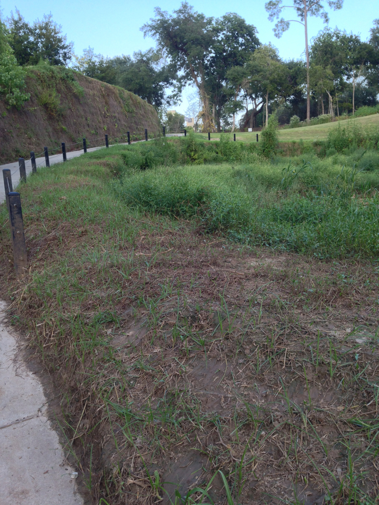 Mowing of wildflowers and native grasses along concrete ramp leading to Buffalo Bayou boat launch in Memorial Park. Photo Sept. 19, 2016
