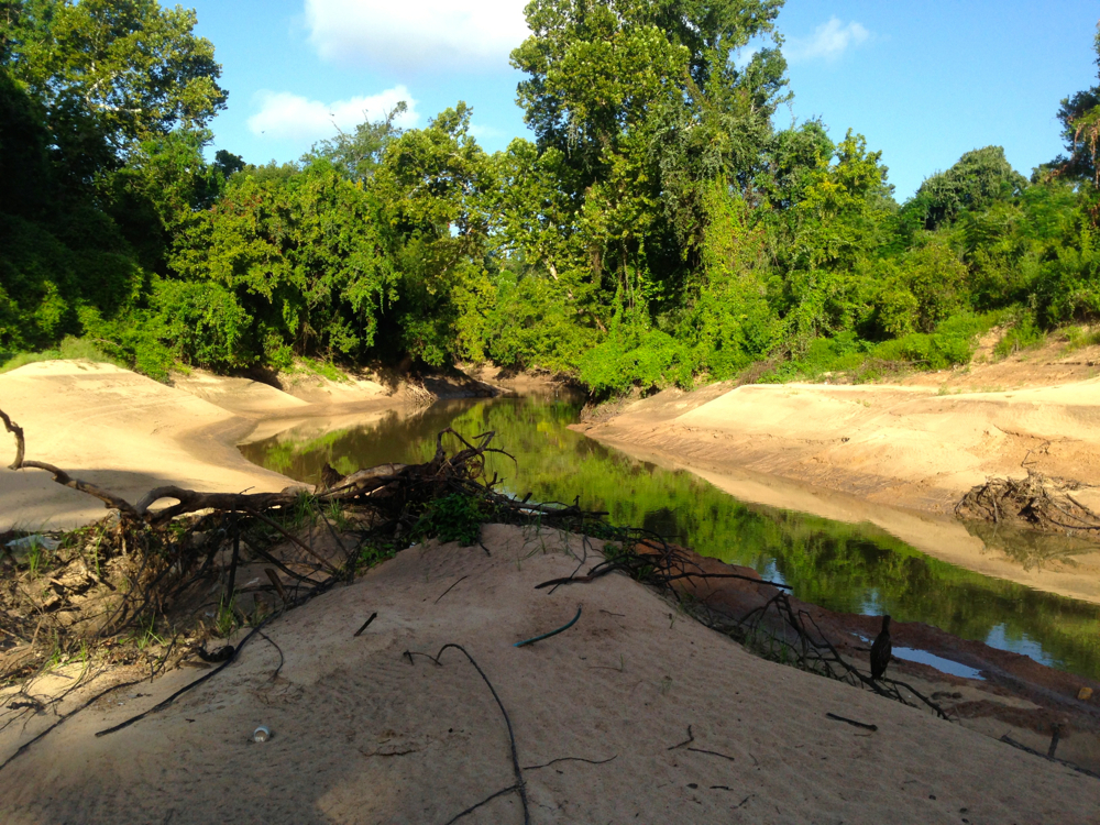 New channel cut by Buffalo Bayou. Heron posing in lower right. Photo Susan Chadwick Aug. 4, 2016