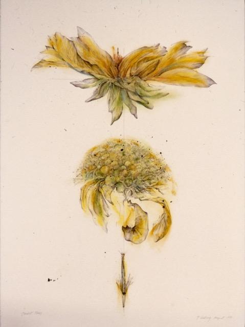 """Penny Cerling, """"Blanket Flower"""""""