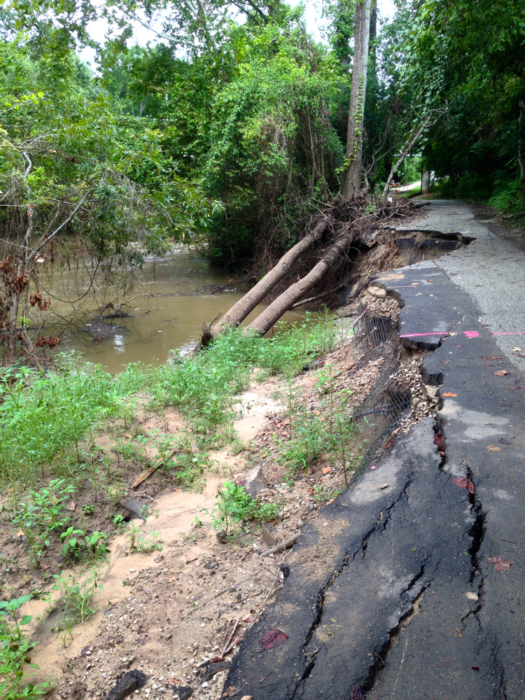 Fallen trees and eroded path on north bank of Buffalo Bayou before repairs began. Note darker patch of asphalt indicating trail had been repaired previously. Photo taken August 19, 2016.